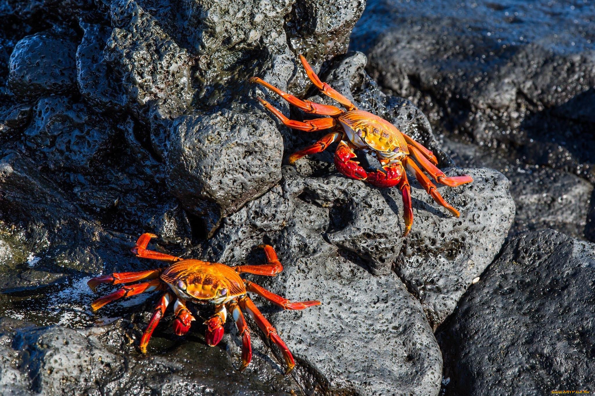 фото морских животных краб должны